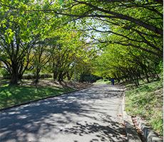緑地を一周できる美しい並木道が続く「樹のみち」